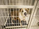 Jacksonville Humane Society unveils 'progressive, state-of-the-art' facility
