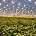 Massive greenhouse hiring 30 workers
