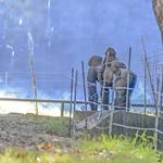 Atlanta's Dian Fossey Gorilla Fund International turns 50