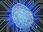 Insights into Identity Theft
