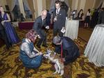Adorable dogs, owl help raise money for the Wisconsin Humane Society: Slideshow