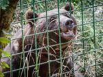 Emerging economies intensify captive wildlife problems