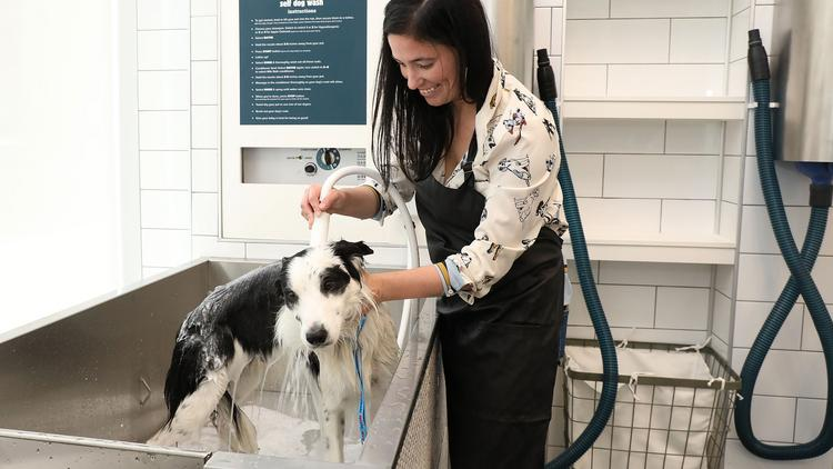 The Groomery Offers Pet Parents Chance To Bathe Their Own Pooch
