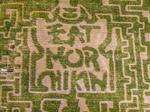Georgia farm goes to the Cows with Chick-fil-A corn maze