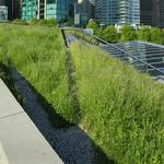 Election 2017: Denver's newly approved 'green roofs' initiative is likely to change