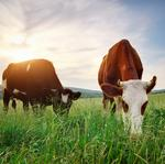 Global animal nutrition company moves North American HQ to OP