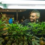 Bill would allow limited-service banks for cannabis businesses
