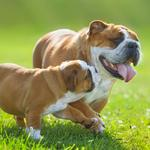 Owning a dog — or its clone — benefits your heart