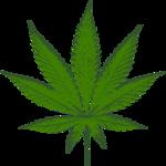 Medical marijuana tries to adapt to suburbia