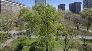 Amazing Space! Treetop Views Facing Washington Square at The Ayer Condominium!