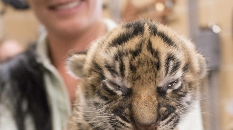 photos jax zoo welcomes baby tigers giraffes and more in 2017