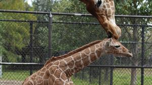 Jacksonville to host international zoo conservation conference for first time