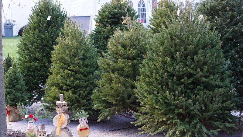 What Christmas Tree Shortage?