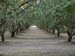 Almond Board: Sustainability is about more than water