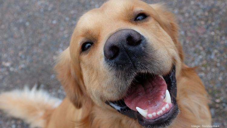Rover com: The most popular dog names in Orlando for 2018