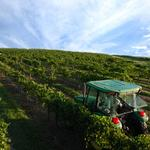 Heard through the grape vine: Local wineries raise a glass to expansion plans for 2018