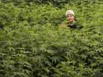 Exclusive: A reckoning has arrived for Oregon's overgrown cannabis industry