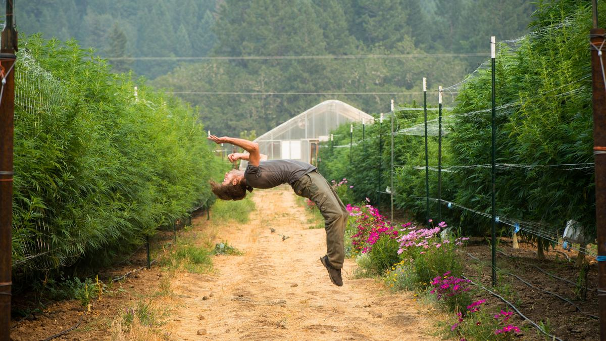 Dr. Bronner's-backed Sun+Earth organic cannabis certification comes to Oregon - Portland Business Journal
