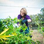 Josephine County sues Oregon as cannabis regulation row escalates
