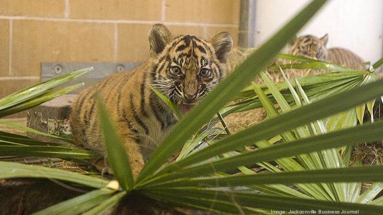 how the jax zoo is tying its conservation efforts to its new baby