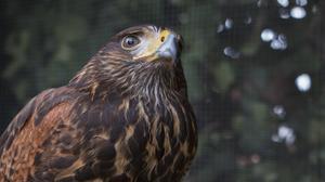 Portland's crow patrol takes its perch