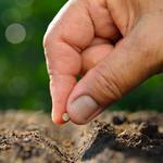 How to work with both the seed and the soil for business growth