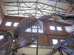 T. rex Ivan opening as permanent display at Museum of World Treasures