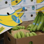 Port Tampa Bay goes bananas as shipments resume after 21 years
