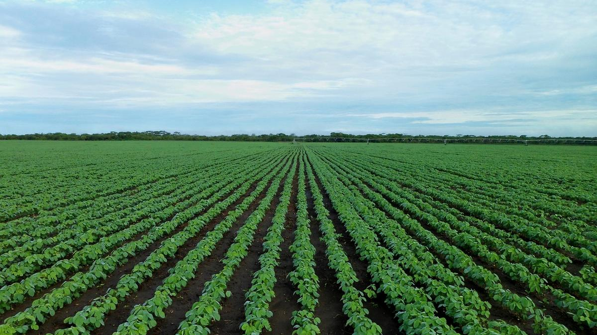 Seed sellers want federal limits on Mosanto, BASF weed killer - St