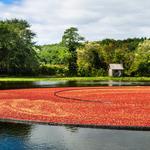 EU's retaliatory tariffs could bog down struggling Mass. cranberry industry