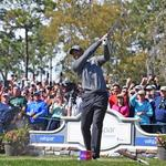 Tigermania drives record attendance at Valspar Championship