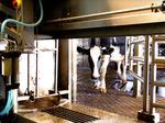 Robotic milking is helping smaller dairies, says CoBank report