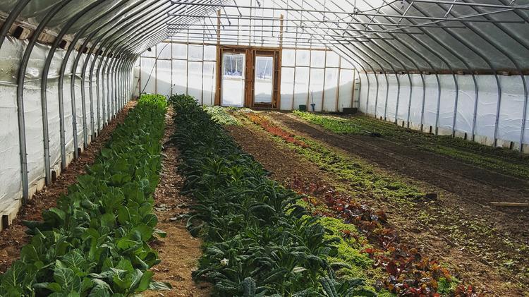 urban farm business plan
