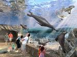 Houston Zoo launches $150M capital campaign for new exhibits, campus overhaul