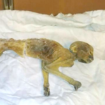 Mummified monkey found in former Dayton's department store in Minneapolis