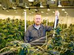 Growing pains: California growers struggle with whether to go legit