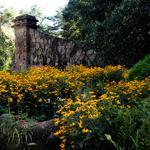 Gardens tourism blooming throughout Atlanta