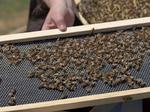 Down to bees-ness: Delta unveils first-of-its-kind Atlanta honey farm