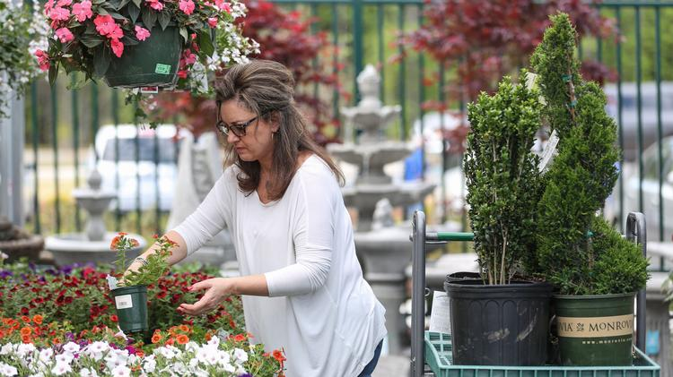 Maria Swett Of Cornelius Picks Out Plants At The New Pike Nurseries In