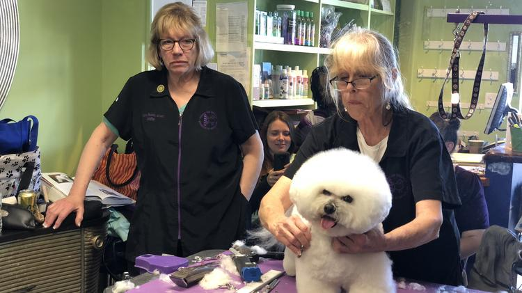 National Dog Grooming Association Of America Offers Dog Grooming