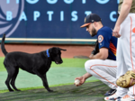 Astros' all-star pitcher to host party to raise funds for pets and kids