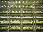 German manufacturing stalwart buys Austin startup that powers vertical farms
