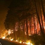 Why Oregon forests may continue to burn