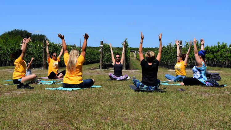 Cherrylake staff members gather for a yoga class at the Groveland-based company's tree farm.