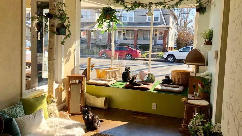 Cat Cafe Indianola