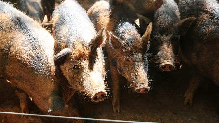 GESS International proposed $200M worth of swine-waste