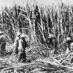 Hawaii leaders react to the end of Hawaii's sugar era