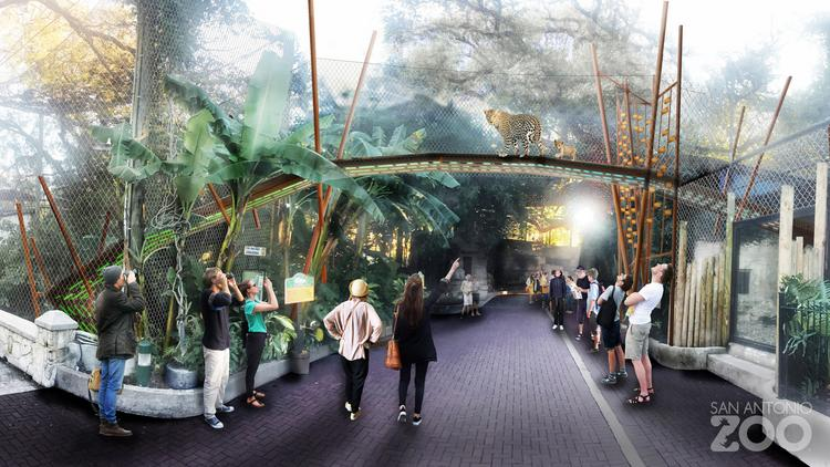 Jaguar San Antonio >> First Look San Antonio Zoo Plans To Invest Millions In New