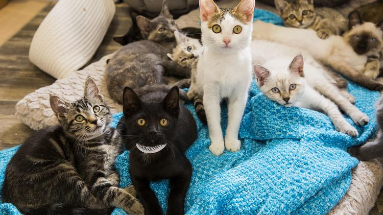 Look Inside Purrfect Day Cafe Hint There Are 18 Kittens Photos