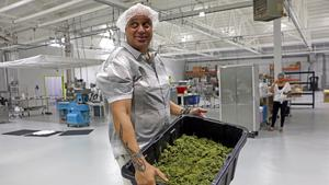 Cannabis edibles co-packer selling for $160M